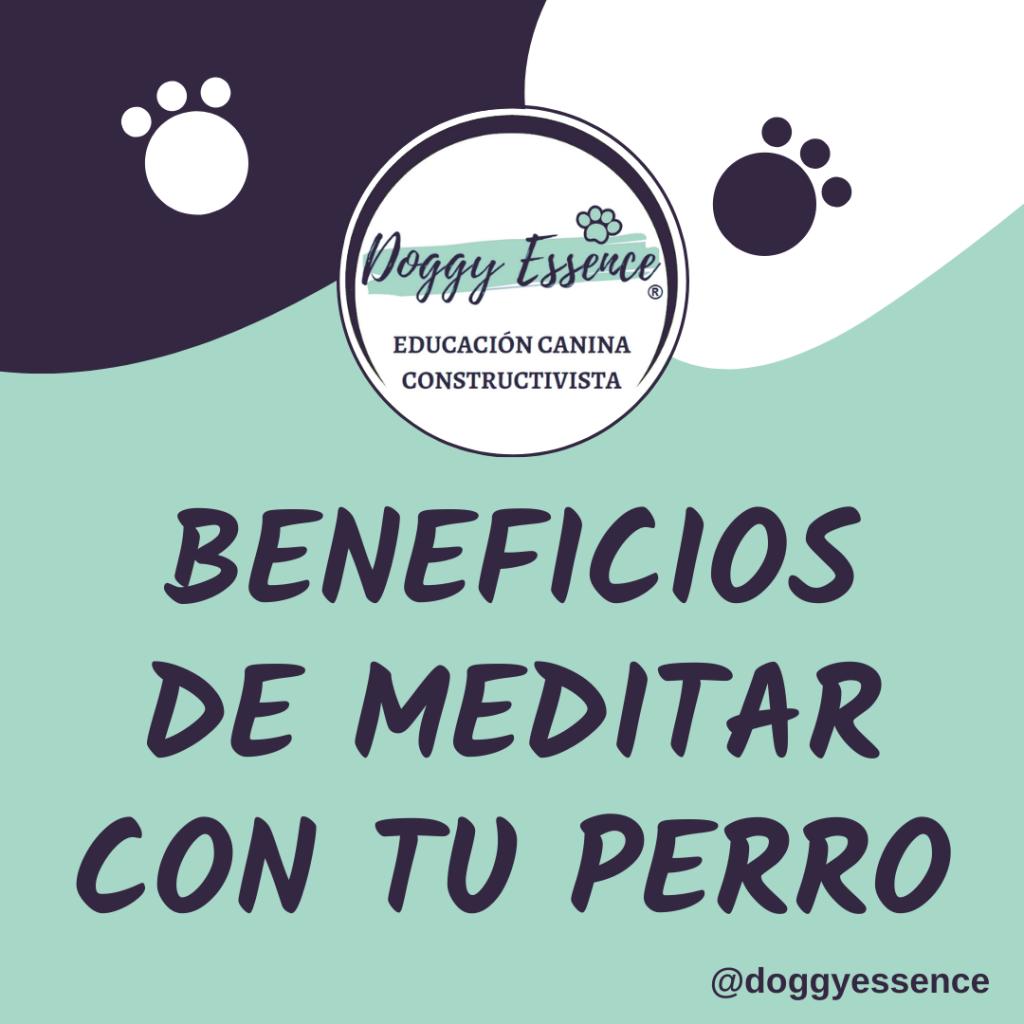 meditar medita con tu perro beneficio beneficios